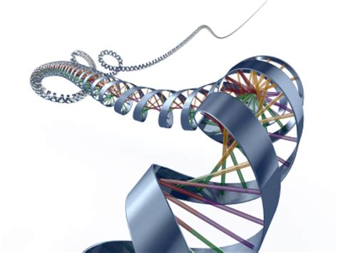 DNA Essay Writing Help - ProfEssayscom